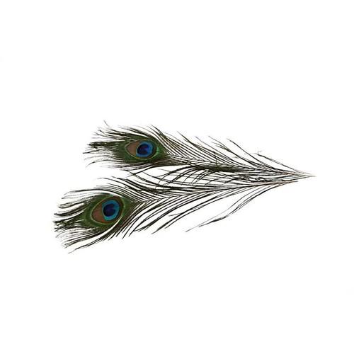 Peacock Feathers L: 25-30cm (CC51810)